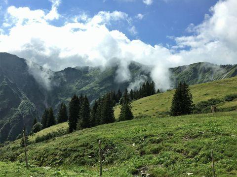 Almenrunde in Mittelberg