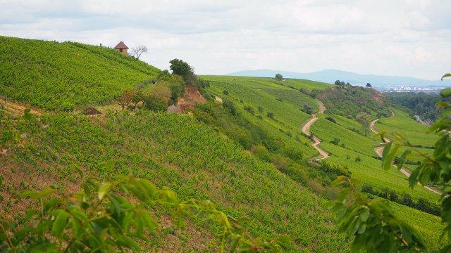 Roter Hang – ein besonderes Weinanbaugebiet
