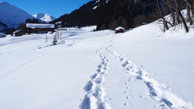 Holzgauer Hängebrückenrunde (Winter)